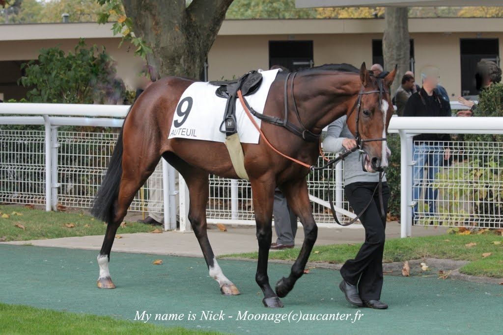 Photos Auteuil 2-11-2014 (48h de l'obstacle) IMG_5412