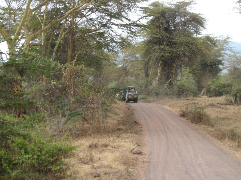 Ngorongoro'nun yeşil bölgesi