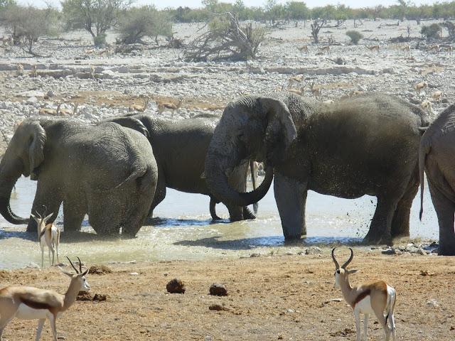 أفضل ما في أفريقيا  Best of Africa Namibia_180807123308