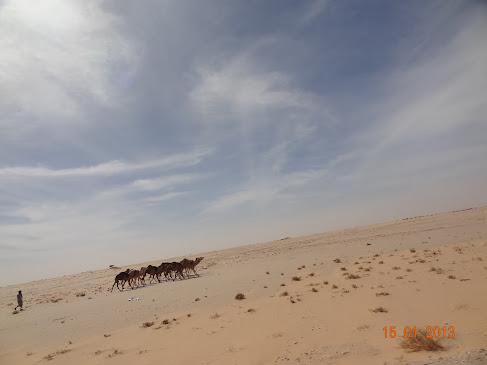 marrocos - Marrocos e Mauritãnia a Queimar Pneu e Gasolina - Página 6 DSC06021
