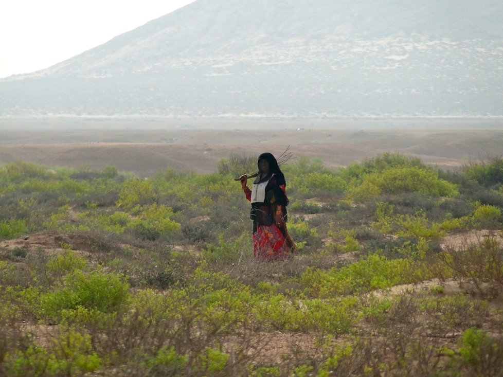 An Omani shepherd looks on curiously.