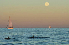 Dolphins, sailing the ultimate offshore race in Texas under harvest moon