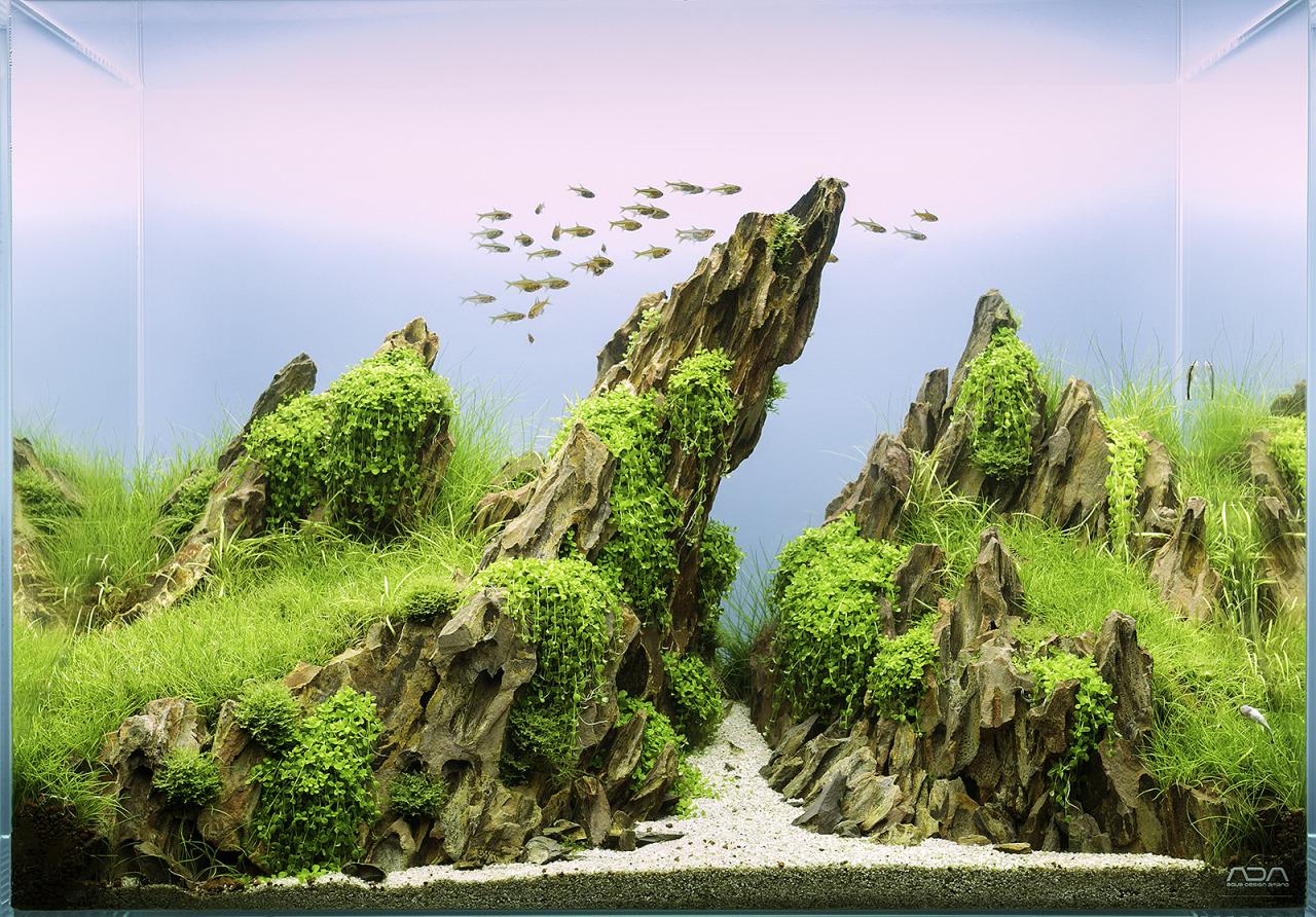 Bộ sưu tập hồ thủy sinh bố cục núi đá