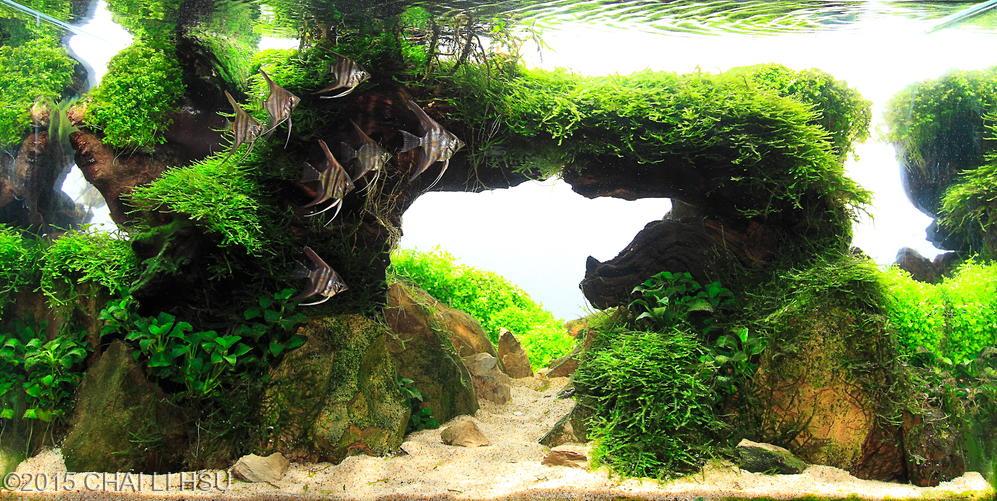 Vinh Aqua giới thiệu bộ sưu tập hồ thủy sinh cầu vòng