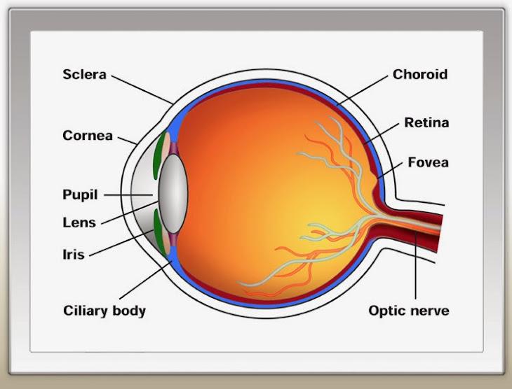 Vitamin Mata Untuk Mata Astigmatisme