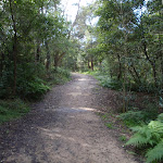 Blackbutt Ck Track (55337)