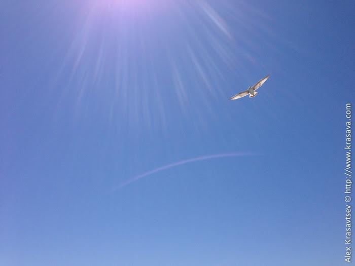 Белеет чайка одинокая