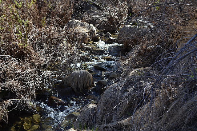 creek over rocks with islands of dried grass