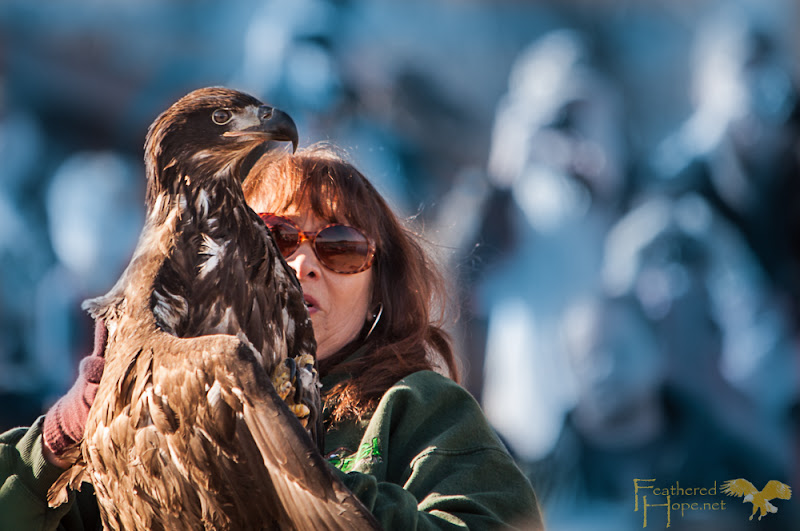 The world fades away to just Marge and the eagle as she understands he's ready and he knows his life is about to begin. Photo by Lisadawn Schram/Feathered Hope.Net