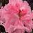 Ess Aech Khan avatar image