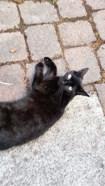 All-black cat with pale eyes lounging on the patio