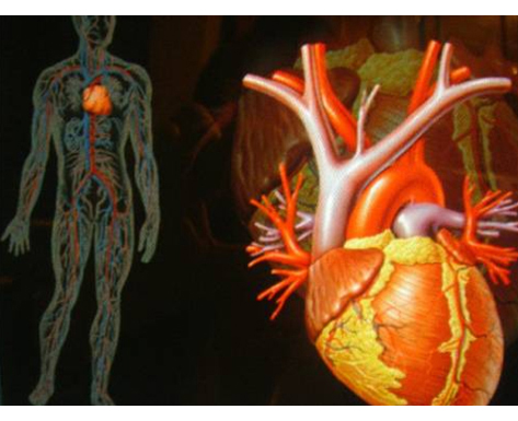 Claves de Salud: Guia sobre la Hipertensión