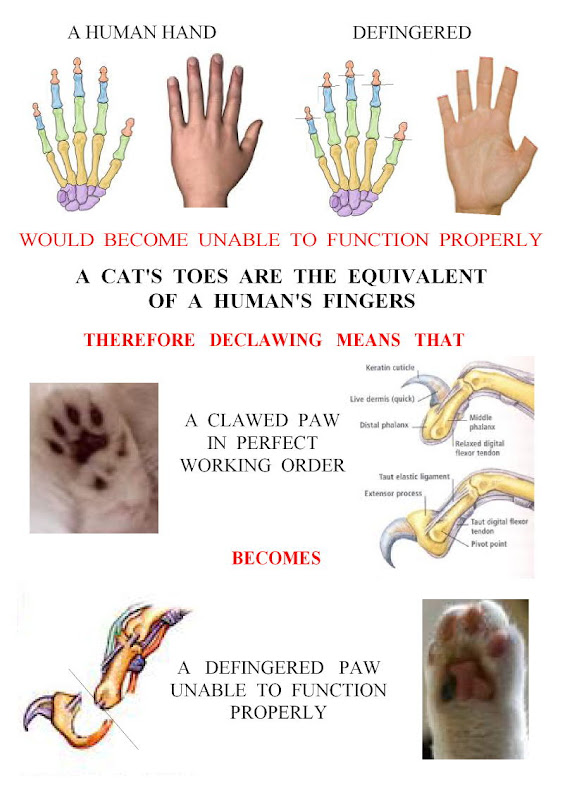 essay on declawing cats Cat declawing, or onychectomy, like any surgery, should only be the last resort,  that is, when not doing so is worse and could lead to the cat's.