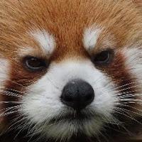 Katherine Stenglein's avatar