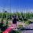 alicia ruiz avatar image