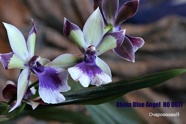 продам орхидейки IMG_2626