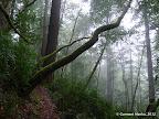 Doe Ridge Trail