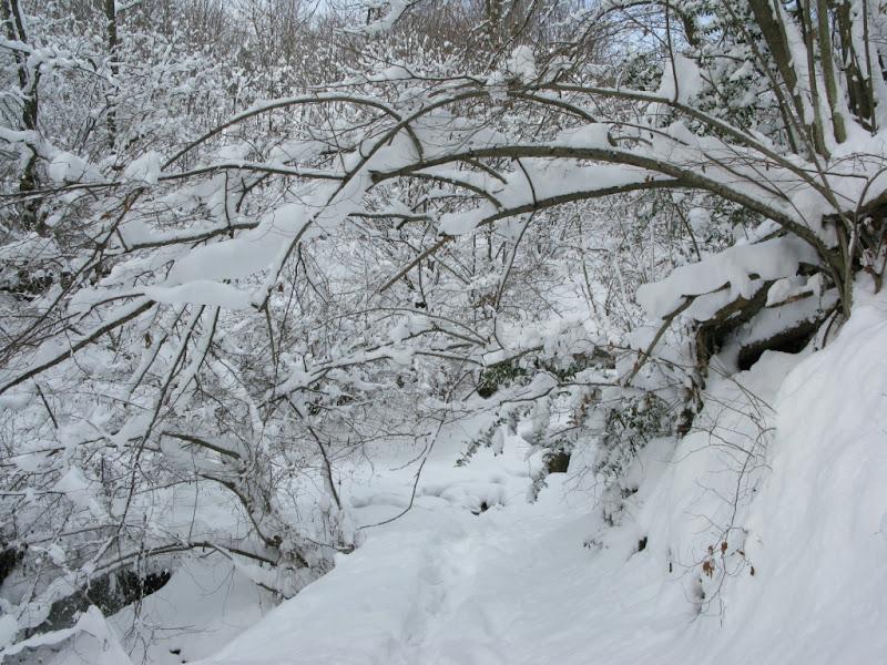 Los caminos se cierran con el peso de la nieve.