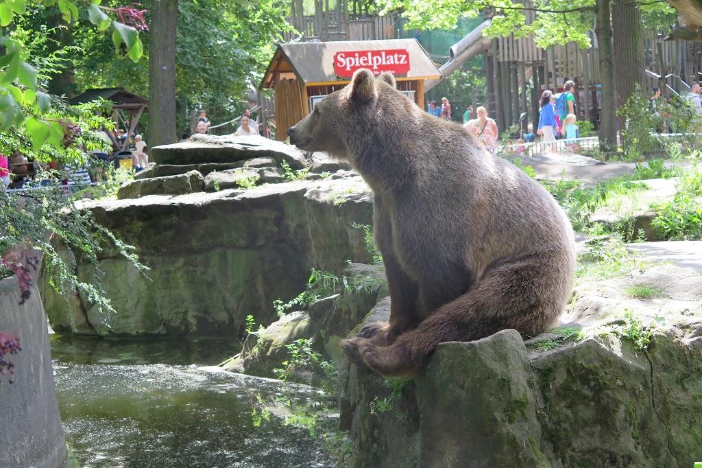 In freier Wildbahn gefallen mir Bären einfach besser