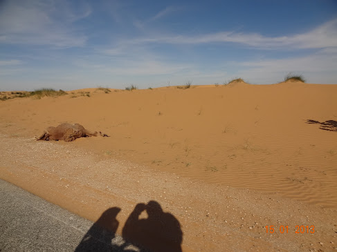 Marrocos e Mauritãnia a Queimar Pneu e Gasolina - Página 7 DSC06068