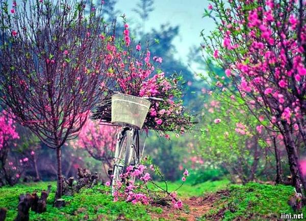 thơ mùa xuân thanh bình