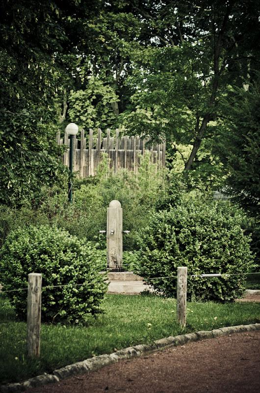 une fontaine, 2 arbustes, 3 traitements... 20110723_06_fontaine_DSC0324-3