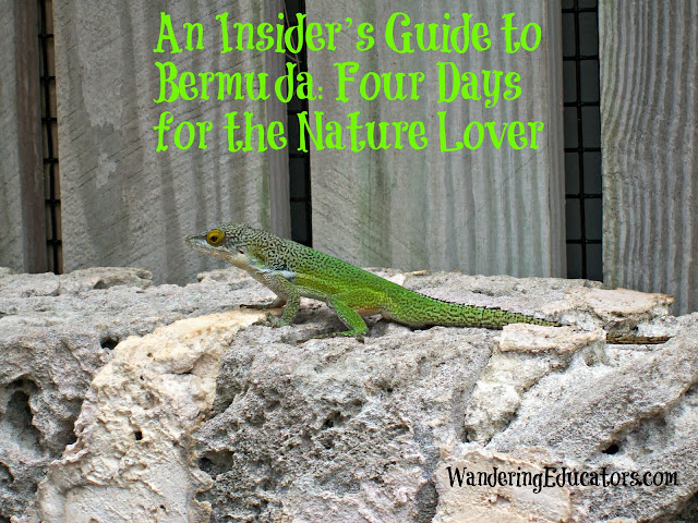 An Insider's Guide to Bermuda: Four Days for the Nature Lover
