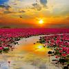flower14 60