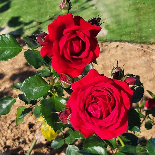Elena Gordillo