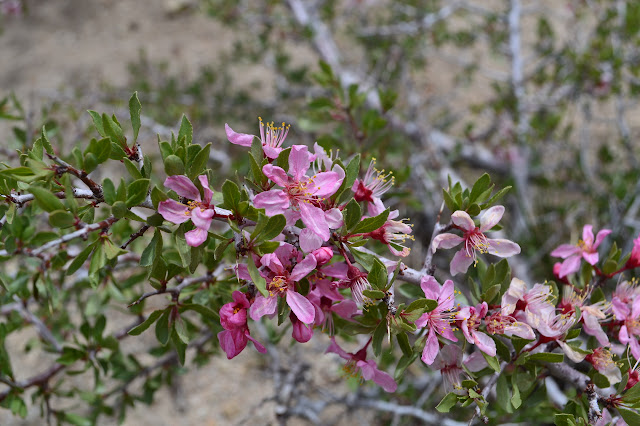 bush with many pink flowers