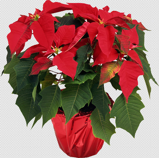 Holliewood_Xmas_Flower5.jpg