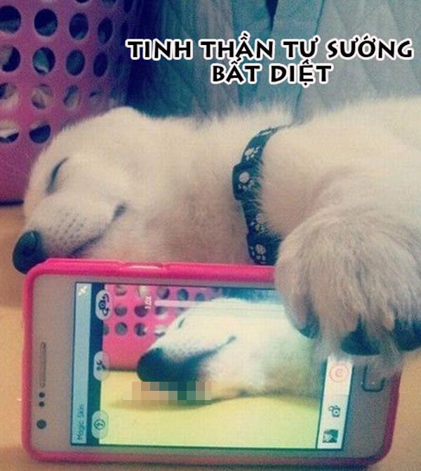 Ảnh chế chú chó tự sướng hài hước