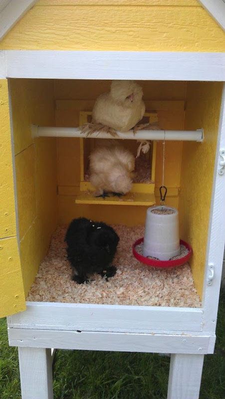 Happy Chicks!