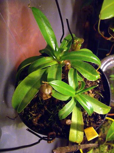 photos de mes orchidées en fleur - Page 2 IMGP4856