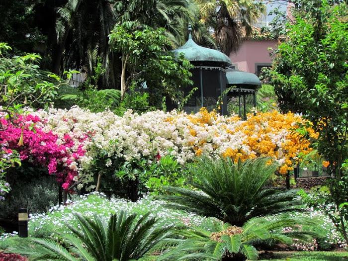 flowers in Quinta Vigia gardens