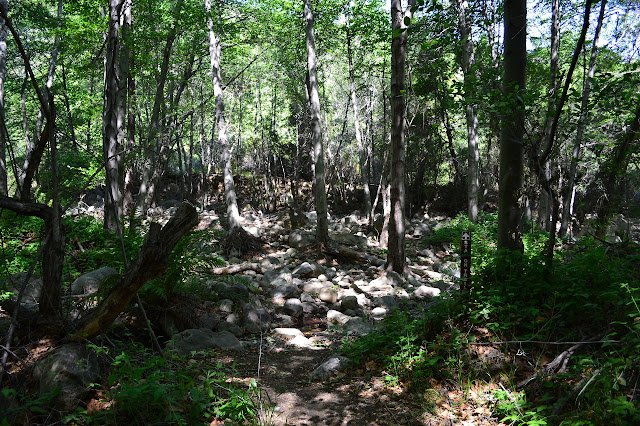 an extra wide section of creek where the trail decides to cross it