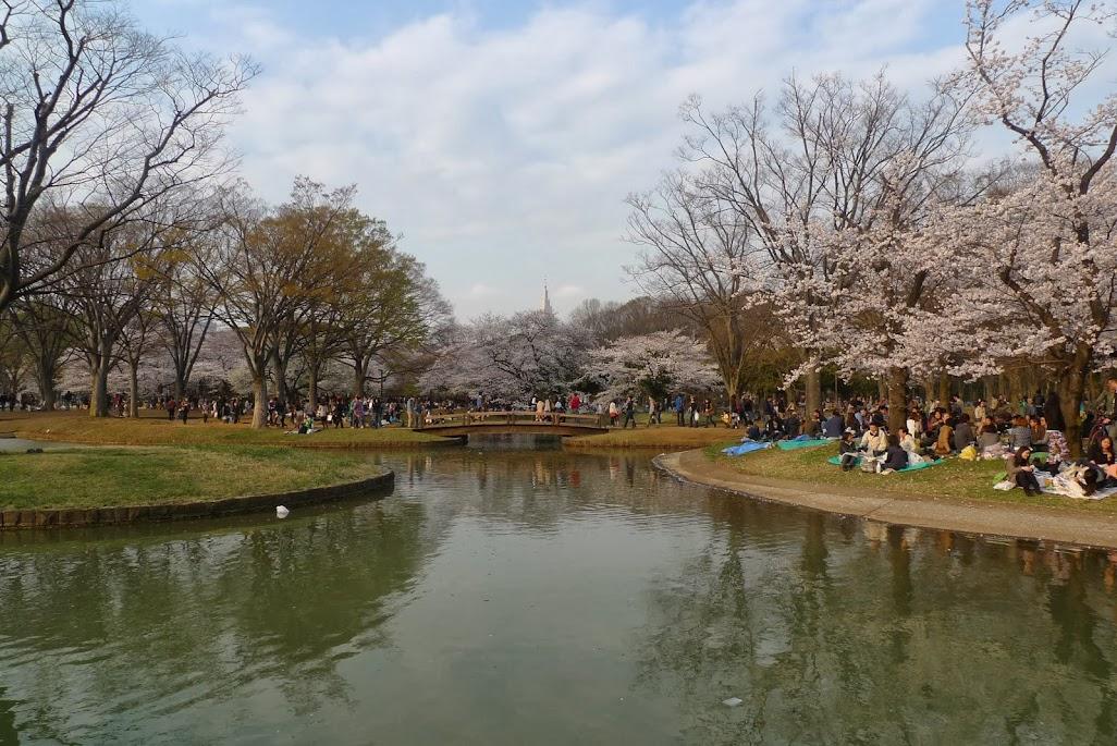 sakura yoyogi tokyo