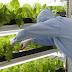 Đơn hàng nông nghiệp cần 9 nam thực tập sinh làm việc tại Ibaraki Nhật Bản tháng 03/2017