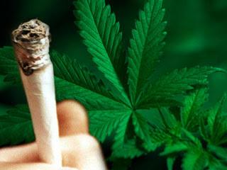 Benarkah Ganja Lebih Berbahaya Dibanding Rokok?
