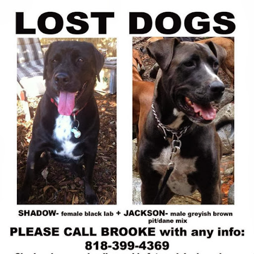 Lost in Cypress Park: Black Lab and Pitbull/Great Dane mix | The ...
