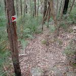 Arrow nailed to tree (73548)
