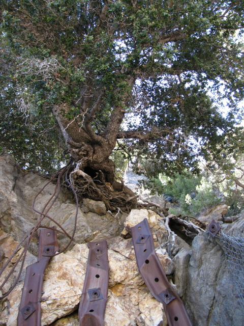 a tree finding survival above the first shafts
