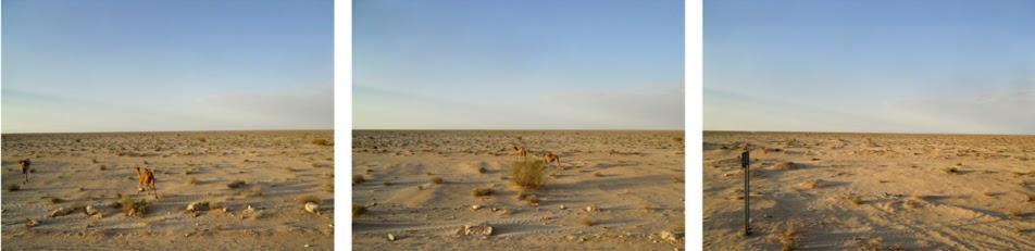 Imagem tirada em autocarro. Alguma vegetação rasteira e alguns animais em três fotografia de lugares muito prõximos uns dos outros