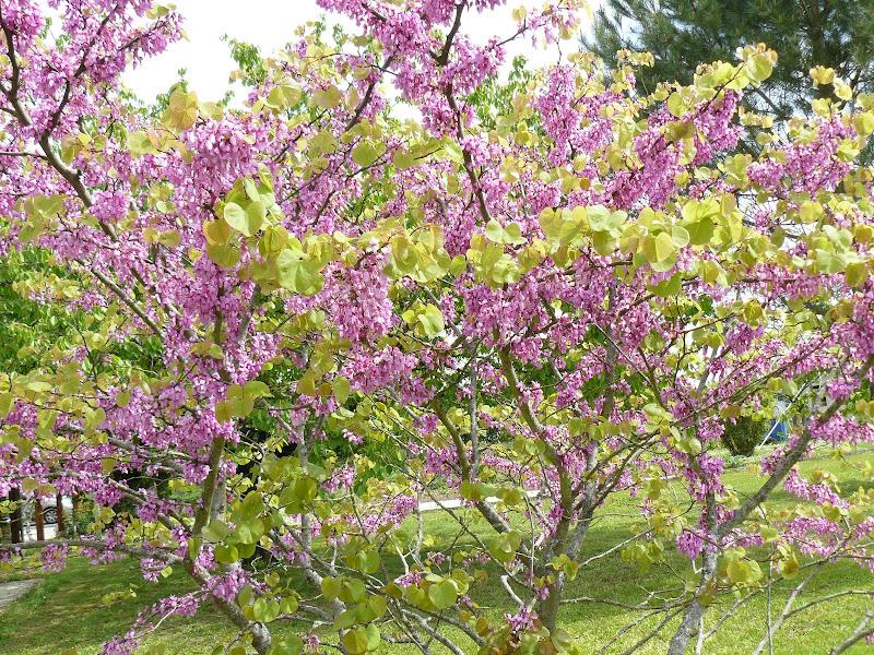 Des floraisons au jardin ... P1030257