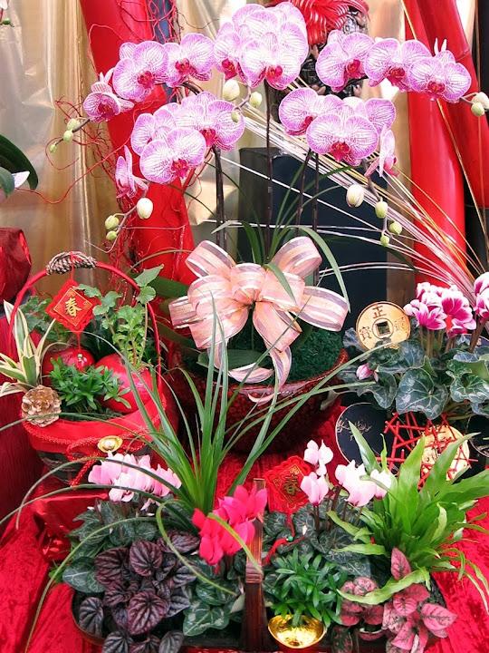 風水盆栽 家中擺設花草盆栽 降溫兼美化 選對植物居家氣場好