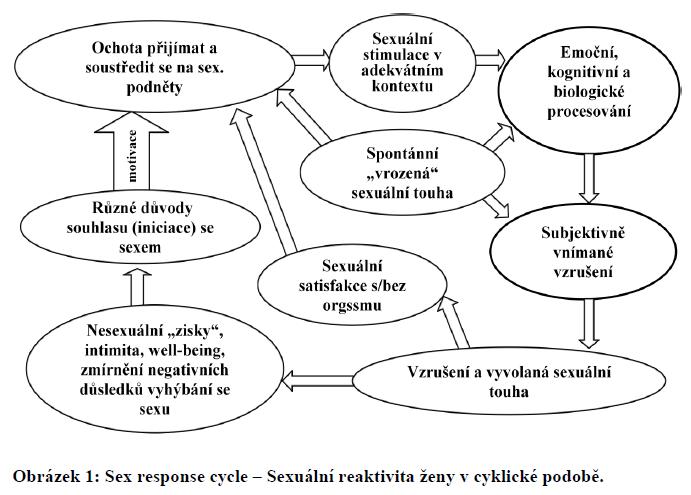 [Obrázek: sexcyklus.png]