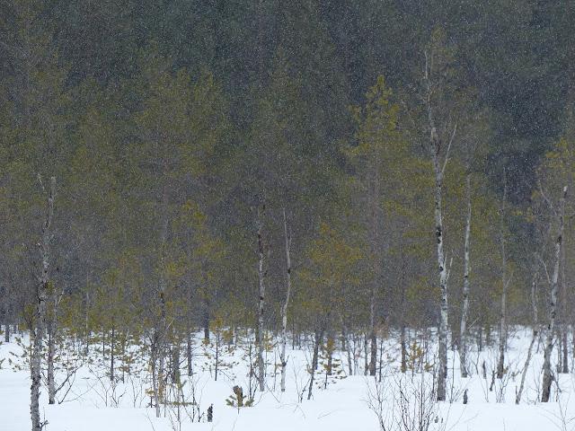 neige%2520harakkasuo%2520014.JPG