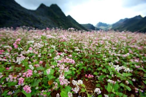 kham pha ban do hoa tam giac mach3 Khám phá bản đồ hoa tam giác mạch