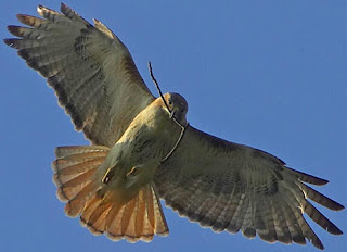 Love Raptor Bird