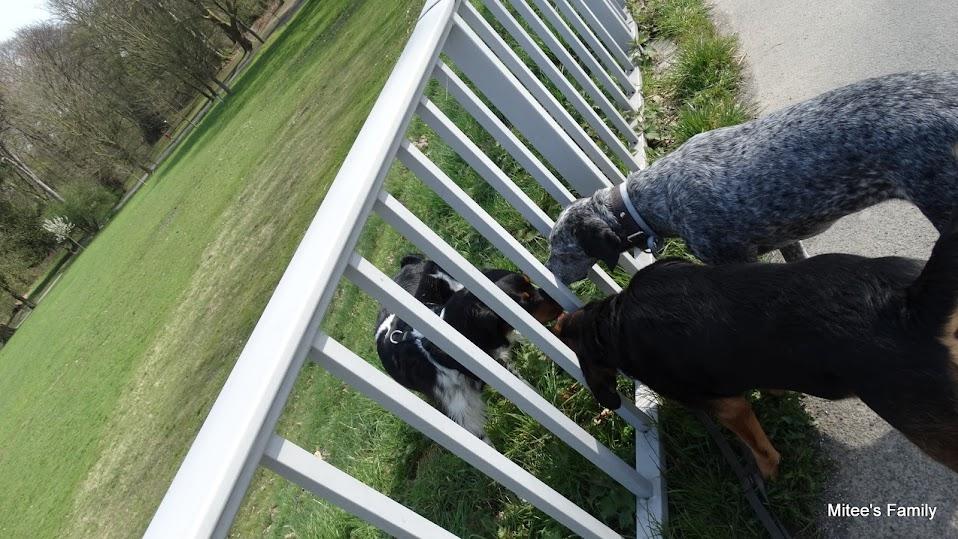 Balades canines en Nord (59)/Pas de Calais (62) - Boulogne-sur-Mer, Calais et Lille - Page 4 DSC01801